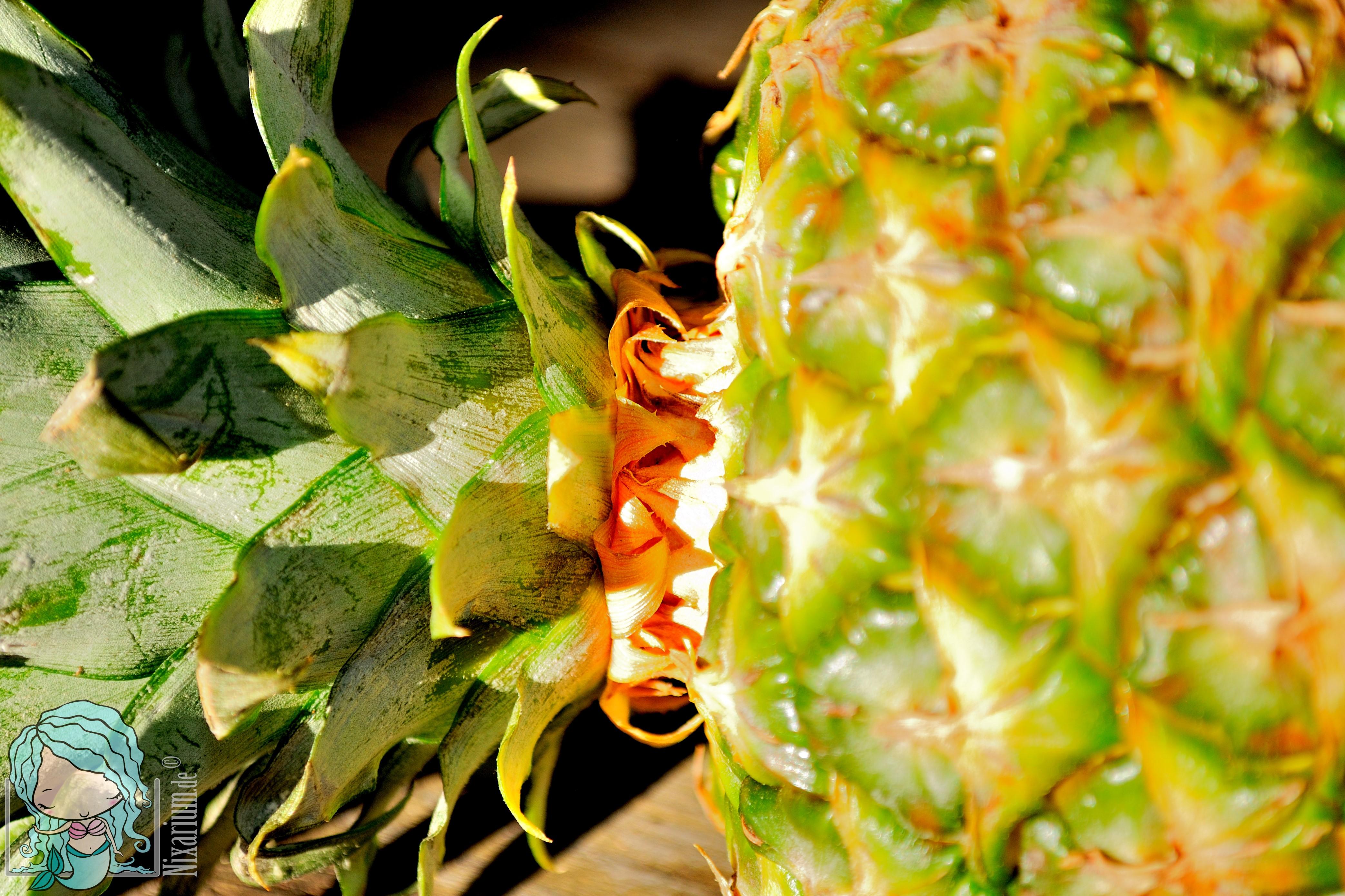 ananas ziehen